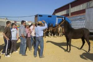 Feria de Ganado 2011 - 02