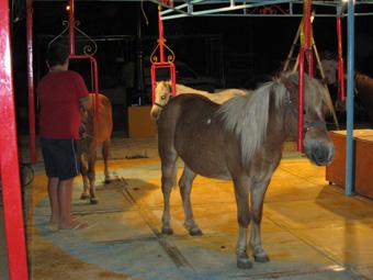 Feria Estepa 2011 13