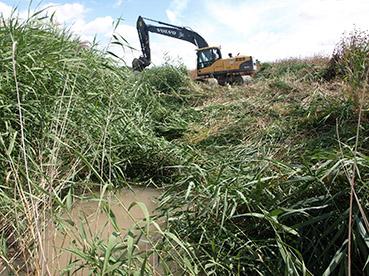 Limpieza del arroyo Salado a su paso por Osuna