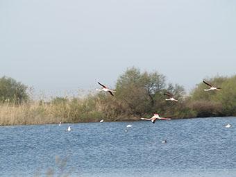 La Laguna del Gobierno, en Lantejuela