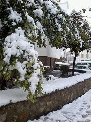 Imagen de la nevada en Estepa registrada en febrero de 2013. Foto: Remedios Camero